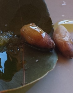Aceite de oliva Bálsamo y medicina