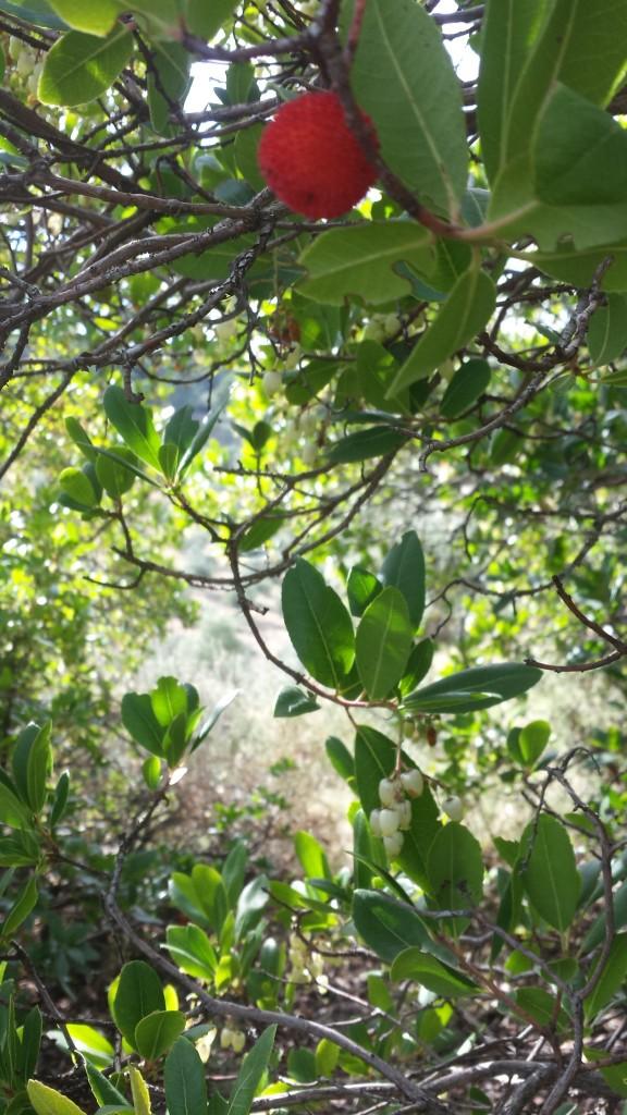 Madroño olivar ecologico oleove