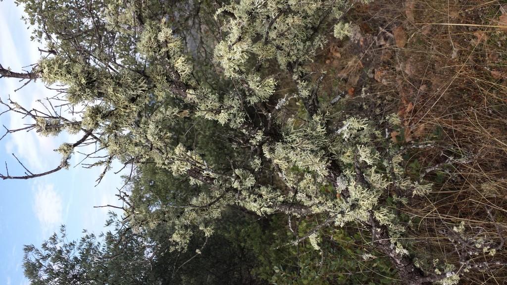 Otoño olivar ecologico